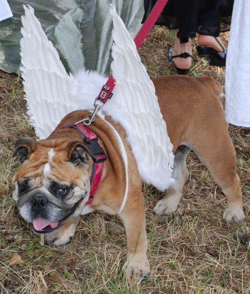 Hund Einbinden In Die Hochzeit Seite 2 Hochzeit Hochzeitsforum De